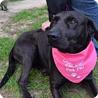Adopt A Pet :: Piper - Doylestown, PA