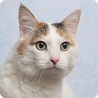 Adopt A Pet :: Pico - Chippewa Falls, WI