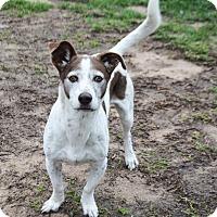 Adopt A Pet :: Cocoa - Stapleton, AL