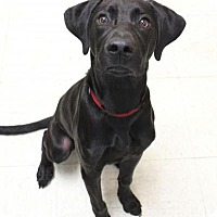 Adopt A Pet :: Charlie - Yukon, OK