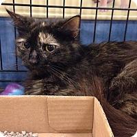 Adopt A Pet :: Charlotte - Gainesville, FL