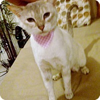 Adopt A Pet :: Zara - Pasadena, CA