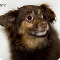 Adopt A Pet :: Macro - Shamokin, PA
