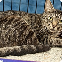 Adopt A Pet :: Wanda - Gainesville, FL