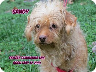 Chihuahua/Dachshund Mix Dog for adoption in Huddleston, Virginia - Sandy