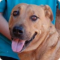 Adopt A Pet :: Melanie - Las Vegas, NV