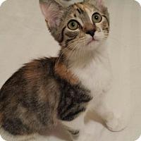 Adopt A Pet :: Beth - Houston, TX