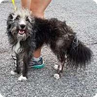 Adopt A Pet :: Leopold - Sudbury, MA