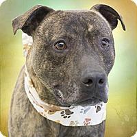 Adopt A Pet :: Bren - Cincinnati, OH