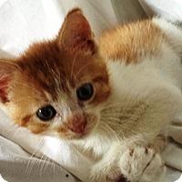 Adopt A Pet :: Coby - Lebanon, PA