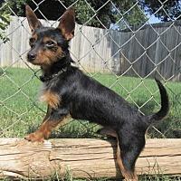 Adopt A Pet :: Leo - Bedford, TX
