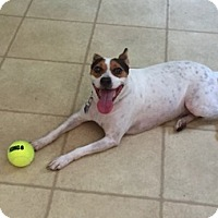 Adopt A Pet :: Bindi - Libertyville, IL