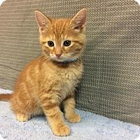 Adopt A Pet :: Carl - Moody, AL