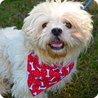 Adopt A Pet :: Zeke - Lafayette, LA