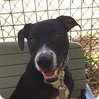 Adopt A Pet :: Pepsi - Edwardsville, IL