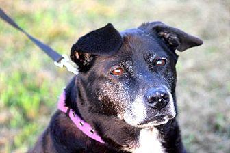 Labrador Retriever Mix Dog for adoption in McKenzie, Tennessee - Sadie