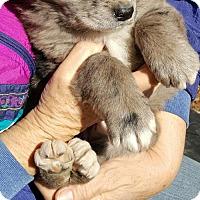 Adopt A Pet :: Baby Girl Babs - Baileyton, AL