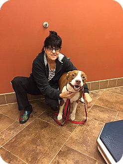 American Staffordshire Terrier/Labrador Retriever Mix Dog for adoption in Burlington, New Jersey - Nina