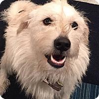 Adopt A Pet :: Frankie - Kyle, TX