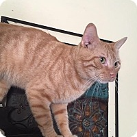 Adopt A Pet :: Hammill - Harrisburg, NC