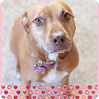 Adopt A Pet :: Rosie Mae - Kingwood, TX