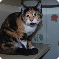 Adopt A Pet :: Bubbles - New Castle, PA