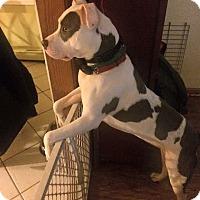 Adopt A Pet :: Charlie - Monroe, CT