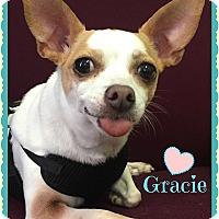 Adopt A Pet :: Gracie - Savannah, GA