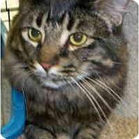 Adopt A Pet :: Beau W - Sacramento, CA