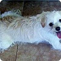 Adopt A Pet :: ELLA - Mission Viejo, CA