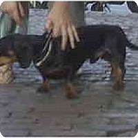 Adopt A Pet :: ALFREDO - Portland, OR