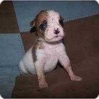 Adopt A Pet :: Keebler - Cuddebackville, NY