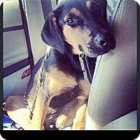 Adopt A Pet :: Lexington - Maryville, IL