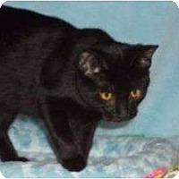 Adopt A Pet :: Becca w/Golden Eyes - McDonough, GA