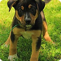 Adopt A Pet :: Reagan - Staunton, VA