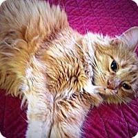 Adopt A Pet :: Katie - Arlington, VA