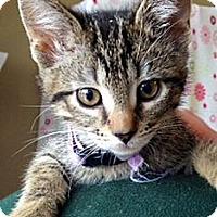 Adopt A Pet :: Anna - Green Bay, WI
