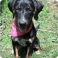 Adopt A Pet :: Kira - Richmond, VA