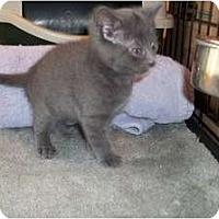 Adopt A Pet :: Larry - Acme, PA