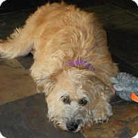 Adopt A Pet :: HARRIET - Phoenix, AZ