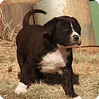 Adopt A Pet :: Mike - Staunton, VA