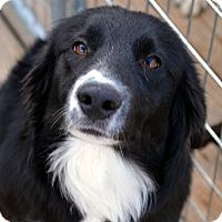 Adopt A Pet :: Kip - Garland, TX