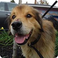Adopt A Pet :: Logan - Cleveland, OH
