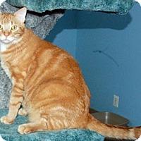 Adopt A Pet :: Gideon - Fairfax, VA