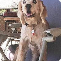 Adopt A Pet :: Bucky - Santa Barbara, CA