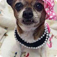 Adopt A Pet :: Sipsey Starr - Fairmont, WV