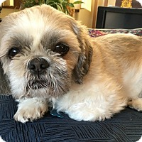 Adopt A Pet :: ROCKY - Eden Prairie, MN