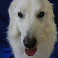 Adopt A Pet :: CHUNK - Granite Bay, CA
