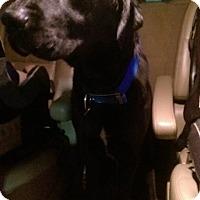 Adopt A Pet :: Gus - Ogden, UT