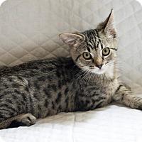 Adopt A Pet :: Van Gogh - Boise, ID